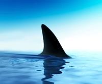 Twilight of the Shark Fin of Doom (2/3)