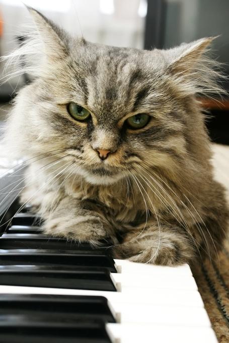 cat-pianist-shutterstock_107731652