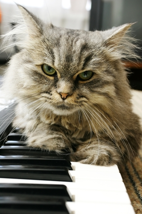 cat-pianist-shutterstock_107731652